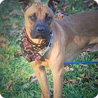 Adopt A Pet :: Eric - Flint, MI