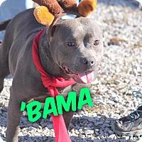 Adopt A Pet :: Bama - Russellville, KY
