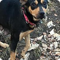 Adopt A Pet :: Lenora - Rockville, MD