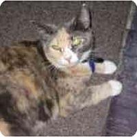 Adopt A Pet :: Lola - Pasadena, CA