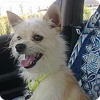 Adopt A Pet :: Leo - Cumberland, MD