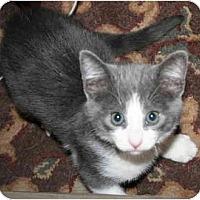 Adopt A Pet :: Brink - Davis, CA