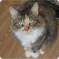 Adopt A Pet :: Lisabeth - Huffman, TX