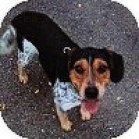 Adopt A Pet :: Ian - Novi, MI