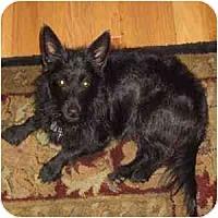 Adopt A Pet :: Skip - Phoenix, AZ