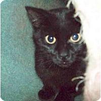 Adopt A Pet :: Cider - Colmar, PA