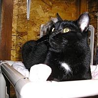 Adopt A Pet :: Rory - Eldora, IA