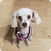 Adopt A Pet :: COOKIE - Costa Mesa, CA