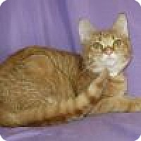 Adopt A Pet :: Ebby - Powell, OH