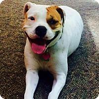 Adopt A Pet :: Greta - Burlington, NJ