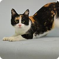 Adopt A Pet :: Ethel - Brooklyn, NY