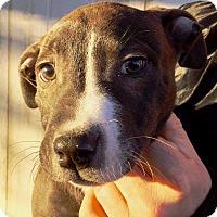 Adopt A Pet :: Louie MD - Rancho Cucamonga, CA