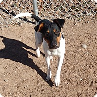 Adopt A Pet :: Happy in El Paso - Austin, TX