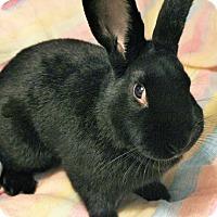 Adopt A Pet :: Wally - Hillside, NJ