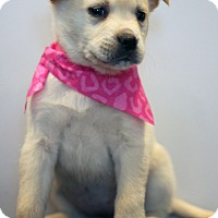 Adopt A Pet :: Montego - Waldorf, MD