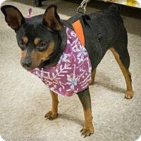 Adopt A Pet :: Momma - Loudonville, NY