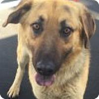 Adopt A Pet :: Alex - Las Vegas, NV