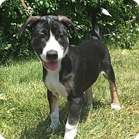 Adopt A Pet :: Kylo - Detroit, MI