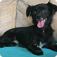 Adopt A Pet :: Sprout - Plainfield, IL