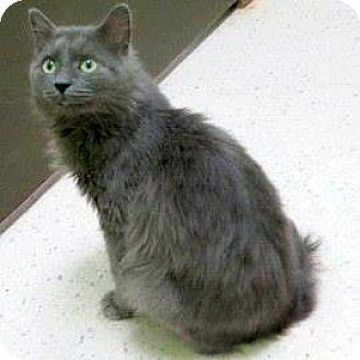 Domestic Mediumhair Cat for adoption in Janesville, Wisconsin - Jonsey
