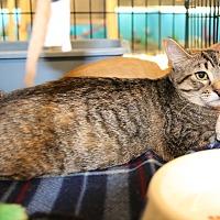 Adopt A Pet :: Libby - Rochester, MN