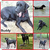 Adopt A Pet :: Buddy - Inverness, FL