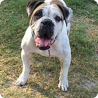Adopt A Pet :: Molly - Hinesville, GA