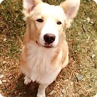 Adopt A Pet :: CARSON - Bronx, NY