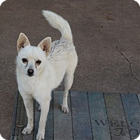 Adopt A Pet :: Farrah - Snyder, TX