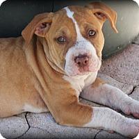 Adopt A Pet :: Patrick - Ft. Lauderdale, FL
