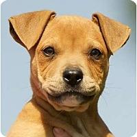 Adopt A Pet :: Laila - Providence, RI