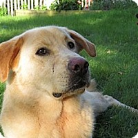 Adopt A Pet :: Austin - Cheshire, CT