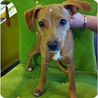 Adopt A Pet :: MILO - Minnetonka, MN