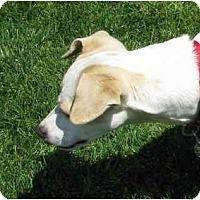 Adopt A Pet :: JACK MURPHY - Scottsdale, AZ