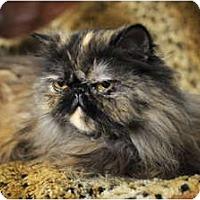 Adopt A Pet :: Lexus - Columbus, OH