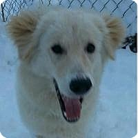 Adopt A Pet :: Polly - Adopted! - Ascutney, VT