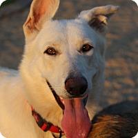 Adopt A Pet :: Maxine - Phoenix, AZ