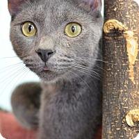 Adopt A Pet :: Wesley 14977 - Atlanta, GA