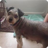 Adopt A Pet :: Callie - Maricopa, AZ