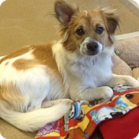 Adopt A Pet :: Shaba - San Antonio, TX