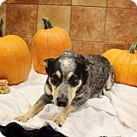 Adopt A Pet :: Juno - Ogden, UT