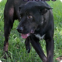 Adopt A Pet :: KENO - Humble, TX
