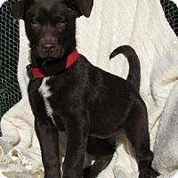 Adopt A Pet :: Jessie - Oakland, AR