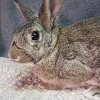 Adopt A Pet :: Wrigley - Newport, DE
