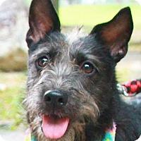 Adopt A Pet :: Bonnie - San Francisco, CA