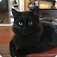 Adopt A Pet :: Shasta - Oskaloosa, IA