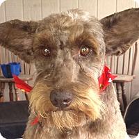 Adopt A Pet :: Georgie AD 06-25-16 - Preston, CT
