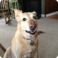 Adopt A Pet :: Brandy - Blackstock, ON