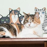 Adopt A Pet :: Tammy - Chicago, IL