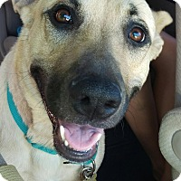 Adopt A Pet :: Allie - East Sparta, OH